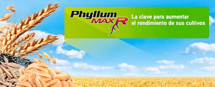 Banner-Phyllum-Max-R